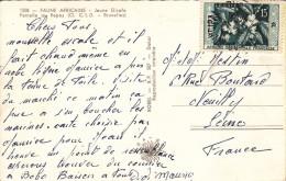 AFRIQUE OCCIDENTALE FRANCAISE 15f LE CAFE Sur CARTE POSTALE FAUNE AFRICAINE - A.O.F. (1934-1959)