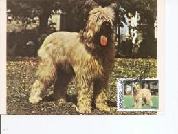 Chiens -Briard ( CM De Monaco De 1982 à Voir) - Dogs