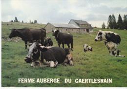 68 - Haut-Rhin - Alsace - SOULTZEREN -  MUNSTER - Ferme Auberge Du Gaertlesrain  Prop Armand BURGER - Format 10,3 X 14,8 - Otros Municipios