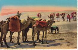 CPA Scènes Et Types - La Caravane (6363) - Algerien
