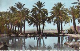 CPSM Biskra - Dans L'Oasis - 1960 (6410) - Biskra