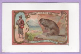 GUERIN - BOUTRON -- Les Mammiferes --  La Marmotte - Guerin Boutron