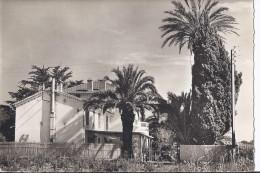 """1 Cpsm Gd Format. Cabasson-Bormes. Hôtel """"Les Palmiers"""" - Bormes-les-Mimosas"""