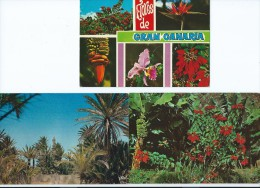 Espagne > Islas Canarias> Lot De 3 Cpm   CANARY ISLAND CANARIES (timbre Stamp ESPANA)*PRIX FIXE - Espagne
