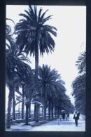 País Valencià. Alacantí. Alacant. Passeig Dels Màrtirs. L. Roisin Nº 42. Ca.1920. - Alicante