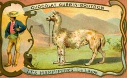 CHROMO ..CHOCOLAT GUERIN-BOUTRON...LES MAMMIFERES...LE LAMA - Guérin-Boutron
