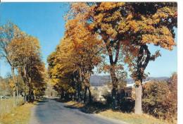 SAINT ANTHEME - Route D'Ambert - Entrée Du Bourg - France