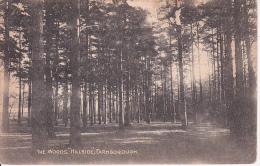 "PC Farnborough, The Woods ""Hillside"" (6434) - England"