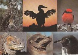 ISLAS - GALAPAGOS - Postkaarten