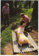Bubry Morbihan Legourrierec Boucher Tue Le Cochon Aventure Carto Tirage Limité 1986 état Superbe - France