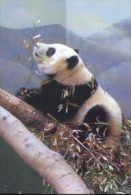 PANDA   Postcard Unused   ( Z 91 ) - Otros