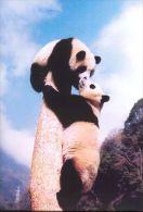 PANDA   Postcard Unused   ( Z 92 ) - Otros