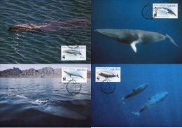 (WWF-247) Maxi Maximum Cards / Maxicard W.W.F. South Africa Whales 1998 - Maximum Cards