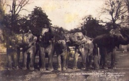 Animaux : Carte Photo - éléphants - Village Hindou (vierge) - Éléphants