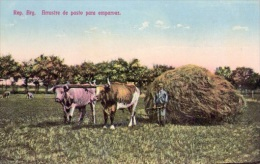 Attelage - Argentin + Pub Ginebra Kamp Au Verso - Carte Couleur (vierge) - Attelages