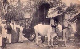 Attelage : Double Bullock Cart - Ceylan (vierge) - Attelages