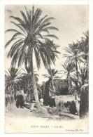Cp, Algérie, Vieux Biskra, Biskra, Une Rue - Biskra