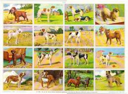 Races Chiens Lévrier Fox Caniche Cocker ...format 24x33 Cm état Superbe 1957 - Tiere