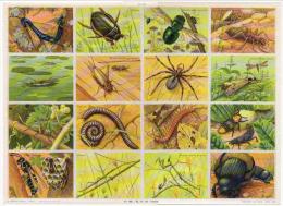 Insectes Tarentule Phasme Grilon Iule Scolopendre Arnaud Format 24x33 Cm état Superbe 1957 - Tiere