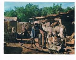 CARTE POSTALE COULEUR.................. FORT-LAMY..... ...... - Tchad