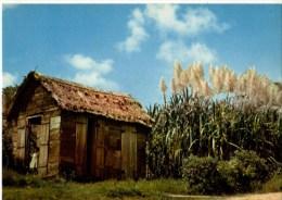 C P M-----ANTILLES TOURISTIQUES-----CANNE A SUCRE-----voir 2 Scans - Antilles