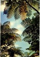 C P M-----ANTILLES TOURISTIQUES-----FOUGERES ARBORESCENTES-----voir 2 Scans - Antilles