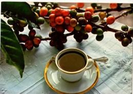 C P M-----ANTILLES TOURISTIQUES-----LE MEILLEUR CAFE-----voir 2 Scans - Antilles