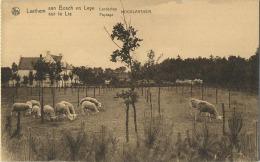 Hooglaathem : Laathem .  (  Carnet Kaart ) - Sint-Martens-Latem