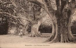 SORGUETTE - Les Platanes Séculaires - Autres Communes