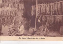 SEMOIS = Maison Didot - Planteur De Tabac - Bouillon