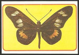 Papillon Charaxes Odysseus Entier Postale Sao Tome Et Principe 1979 Butterfly Postal Stationary St Thomas & Prince - São Tomé Und Príncipe