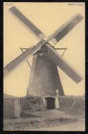 Kasterlee - Beermolen - Terloo - Molen - Moulin - Mill - Mulini A Vento