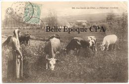 18 - Les Bords Du Cher - Pâturage - Vaches ++++ Grand Bazar, Tours, #608 ++++ Vers Les Riceys, 1905 - France