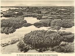 Ref 432- Photographie- Tirage Cartonné - Années 1930 - Barriere De Madrepores Sur Les Cotes De L Archipel Polynesien - - Non Classificati