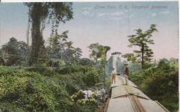 LIENA VIEJA COSTA RICA CARGANDO BANANOS 9852 - Costa Rica