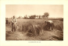 Ref 544- Photographie- Tirage Cartonné - Années 1930 - La Cueillette Du Lin - - Photography