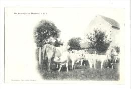 Cp, Animaux, Vaches, Un Pâturage En Morvand - Cows