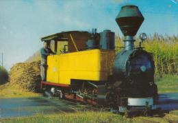 Sugar Cane Steam Loco - Train, Murray Views W206, Unused - Australia
