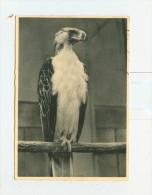 Giardino Zoologico-ROMA,Aquila Delle Scimmie-1959 - Roma (Rome)