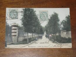 MONTGERON -  L´allée Des Tilleuls - Montgeron