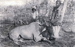 Großwildjagd Erlegte Antilope BELGISCH KONGO 1924 - Karte Mit 15 Centimes Ganzsache, Stempel Missionsprokura Krefeld ... - Congo Belge - Autres