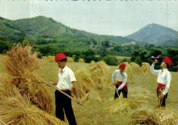 Agriculture - Au Pays Catalan - Les Moissonneurs - 78836 - Cultures