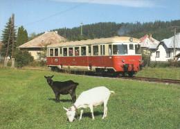 RAIL * RAILROAD * RAILWAY * TRAIN * LOCOMOTIVE * BREZNO * TISOVEC * GOAT * ANIMAL * Saxi 08 027 * Czech Republic - Trenes