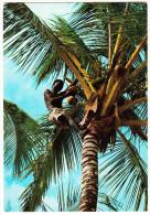 Kenya - Palm Trees, Coconut Picker (2 Stamps/timbres Kenya) - Kenia