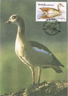 9663. Tarjeta Maxima KUTAMA (venda) 1987. Aves - Venda