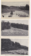 SHEEP REARING IN NEW ZEALAND.  8 CARDS - Breeding