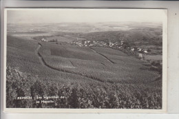 L 5500 REMICH, Weinberge An Der Mosel - Remich