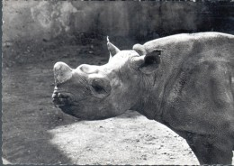 PUBLICITE GENOLINE - RHINOCEROS - Rhinocéros