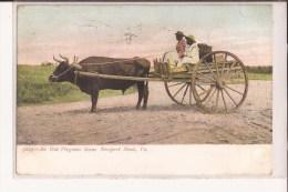 USA - An Old Virginia Scene Newport News, Va. Cow Cart, Black Boys. Sent To Miller Arthur, Providence Street - Newport News