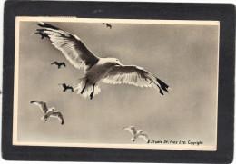 Royaume Uni - Carte Photo Studio St Ives - Oiseau - Expédiée De St Ives - St.Ives